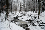 Lila Fisher-Wenzel - A Winter Stream