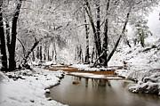 Saija  Lehtonen - A Winter Walk