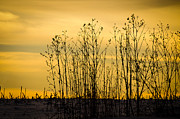 Cornfield Photos - A Winters Silhouette by Christi Kraft