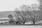 Shed Photo Prints - A winters sketch Print by Constance Fein Harding