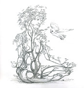 Tree Roots Drawings Framed Prints - A Word to the Wise Framed Print by Mark Johnson