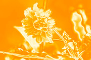 Engaged Prints - A yellow flower Print by Tommy Hammarsten