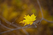 Karol  Livote - A Yellow One