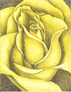 Texas Drawings - A Yellow Rose by Margarett Beverly