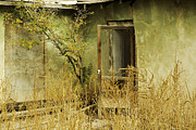 Abdandoned House Photos - Abandoned Green House-002 by David Allen Pierson