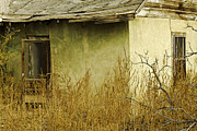 Abdandoned House Photos - Abandoned Green House-003 by David Allen Pierson