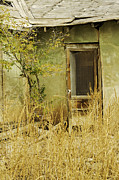 Abdandoned House Photos - Abandoned Green House-004 by David Allen Pierson