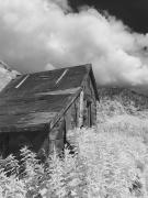 Old Tree Photographs Prints - Abandoned Miners Shack In The Hatcher Print by Mark Stadsklev