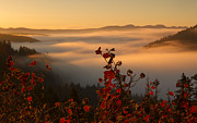 North Idaho Posters - Above the Mists Poster by Idaho Scenic Images Linda Lantzy