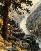 Bighorn Sheep Posters - Above the River Poster by Steve Spencer