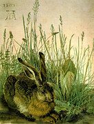 1502 Prints - Abrecht Durer Composite Hare in Weeds 1502 Print by Pierpont Bay Archives