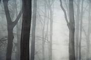 Absolute Silence Print by Dirk Wuestenhagen