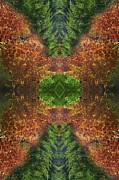 Foliage Prints - Abstract 164 Print by J D Owen