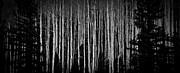 Atom Crawford - Abstract Aspens