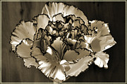 Carnations Photos - Abstract Carnation by Terence Davis