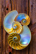 Seashell Seashells Framed Prints - Abstract chambered nautilus Framed Print by Garry Gay