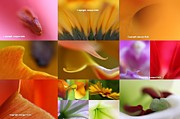 Decor Photography Posters - Abstract Fine Art Flower Photography Poster by Juergen Roth