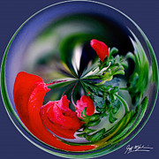 Jeff McJunkin - Abstract Flower Orb II