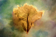 Kathy Rinker - Abstract Leaves in the...