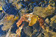 Dan Friend - Abstract leaves in water