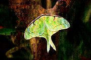 Lime Green Mixed Media Posters - Abstract Luna Moth Painterly Poster by Andee Photography