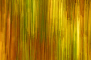 Forerst Art - Abstract nature background by Gry Thunes