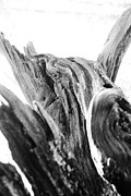 Kelly Hazel Acrylic Prints - Abstract of a Fallen Tree Acrylic Print by Kelly Hazel