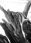 Kelly Hazel Acrylic Prints - Abstract of a Fallen Tree Root Acrylic Print by Kelly Hazel