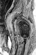 Trees Abstract Tree Lines Forest Wood Prints - Abstract of a Knot Print by Kelly Hazel