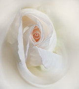 Peach Roses Prints - Abstract Pastel Rose Flower Print by Jennie Marie Schell