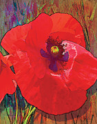 Grace Pullen - Abstract Poppy A