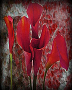 Wishes Mixed Media Framed Prints - Abstract Red Lillies Framed Print by Wishes and Whims Originals By Michelle Jensen
