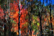 Colors Of Autumn Prints - Abstract Reflection Of Red Maples Print by Christina Rollo
