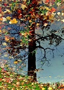 Autumn Leaf Photos - Abstract Tree by Robert Harmon