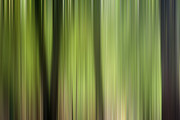 Abstract Trees In The Forest Print by Natalie Kinnear