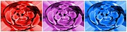Flower Display Digital Art Posters - Abstract Triptych - Red - Purple - Blue Poster by Barbara Griffin