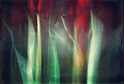 Dirk Wuestenhagen - Abstract Tulips
