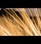 Bread Originals - Abstract wheat field by Tommy Hammarsten