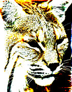 Bobcat Art Framed Prints - Abstract Yellow Bobcat Framed Print by Mark Moore