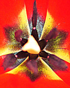 Flower Design Prints - Abstracted Print by Robert Harmon