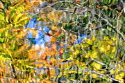 Liquid Gold Prints - Abstracts of Nature Print by Robert Harmon
