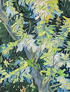 Textures Paintings - Acacia in Flower by Vincent van Gogh