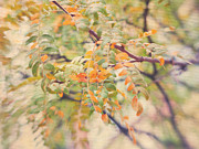 Healing Metal Prints - Acacia in Warm Colors Metal Print by Irina Wardas