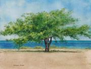 Caribbean Sea Paintings - Acacia Tree by Sharon Farber