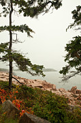 Brent L Ander - Acadia Fog along the...
