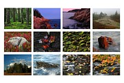 New England Coast Line Posters - Acadia National Park Greetings Poster by Juergen Roth