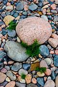 Acadia Rocks 5506 Print by Brent L Ander