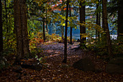 Fir Trees Photos - Access to Cary Lake by David Patterson