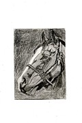 Race Drawings Originals - Aceo portrait of Union Rags by Melissa Nowacki