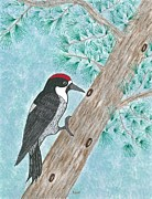 Acorn Paintings - Acorn Woodpecker by Susie Weber